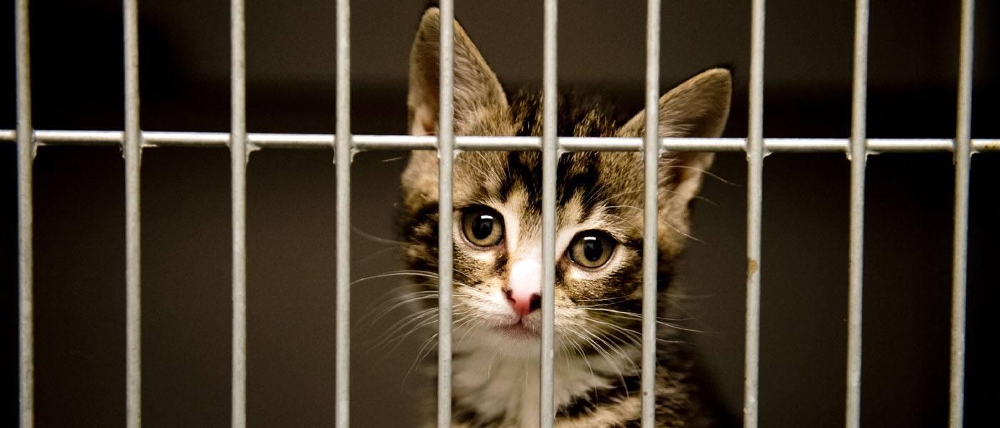 Home header kitten in opvang