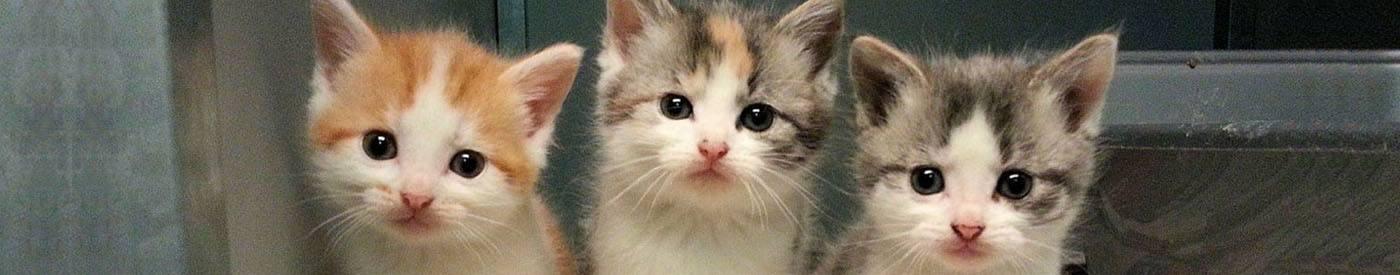 aanvraag kittens