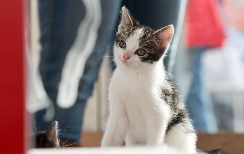 Nieuws Kittens op Animal Event 2016
