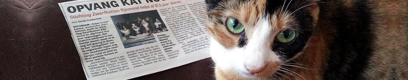 Diva leest de krant