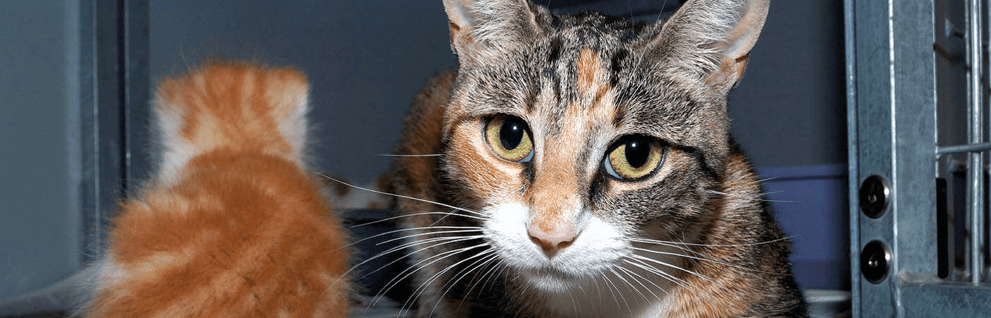 H5a_poes-met-kitten