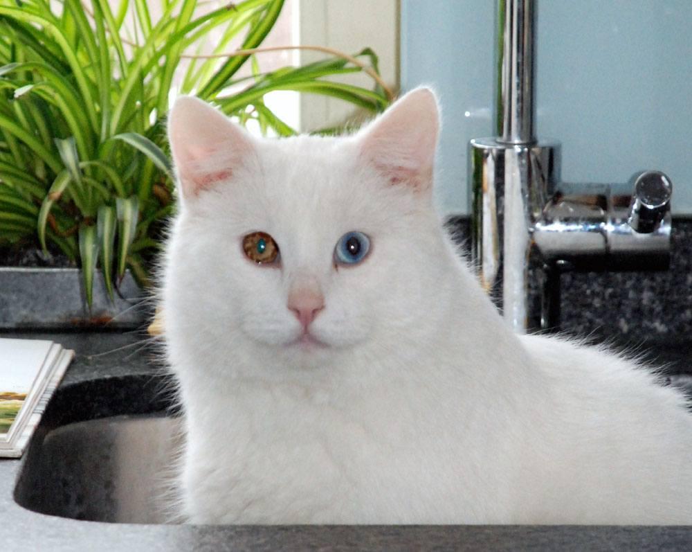 Wilt u een kat?