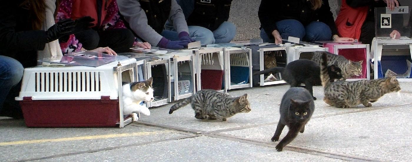 Stichting zwerfkatten rotterdam