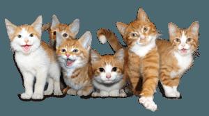 rode kittens transp 500