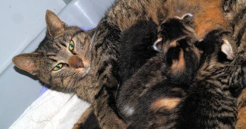 2015 eerste moederpoes met kittens