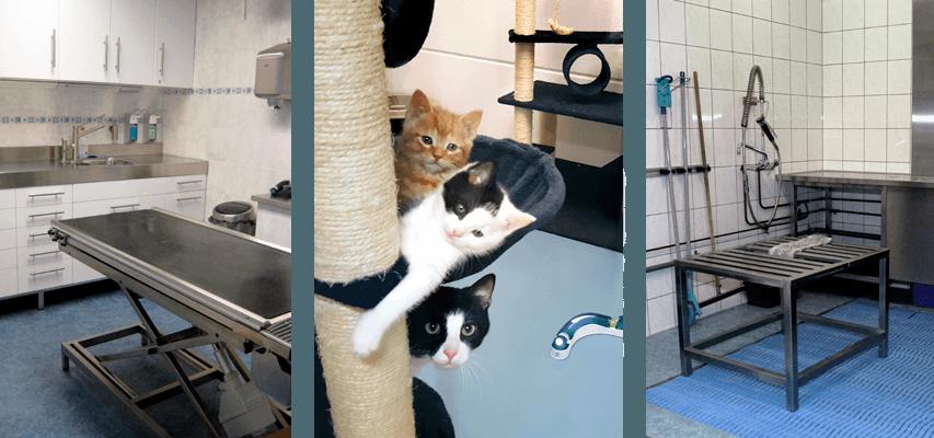 De zwerfkattenopvang