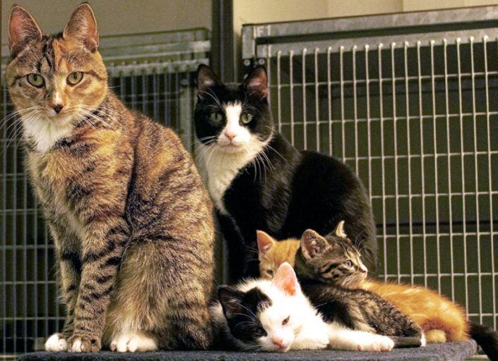 2016 Kattenfamilie in opvang