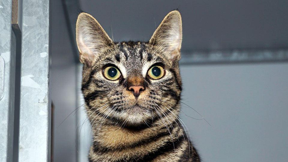 Nieuws kat met vijf poten