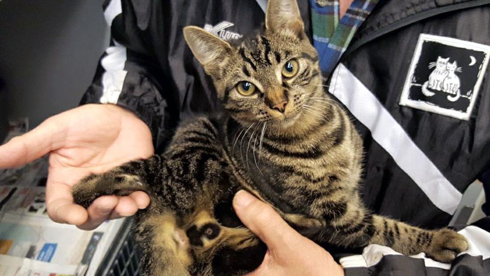 Quint, de kat met 5 poten